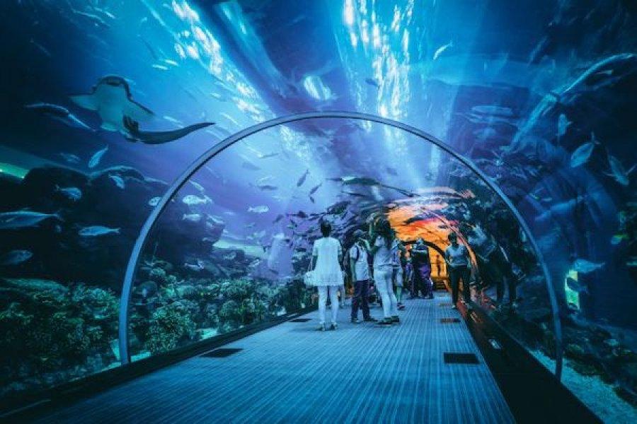 Seaworld Jakarta